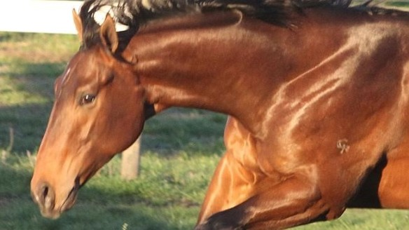 Jimmy, Black Caviar's brother, was bought by BC3 for $5 million at the Easter Yearling Sales.